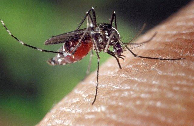 Naturalne metody w walce z komarami